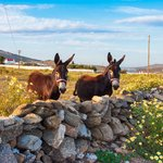 Discover the Authentic Villages of Mykonos