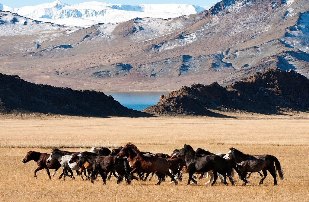 Search for wild Mongolian horses in the twilight hours