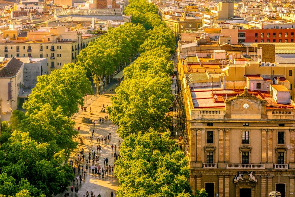 Leafy Trees lining Barcelona's La Rambla