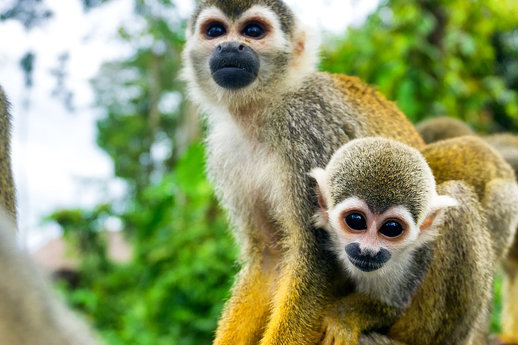 Monkey sightings in Colombia's Amazon region