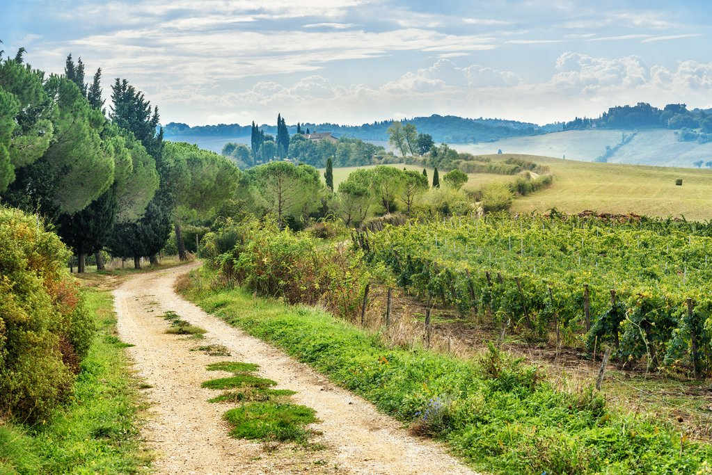 Landscape in Chianti region, near Siena