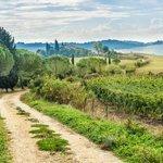 Landscape in Chianti region, near Siena