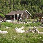 Photo from Visit Flåm