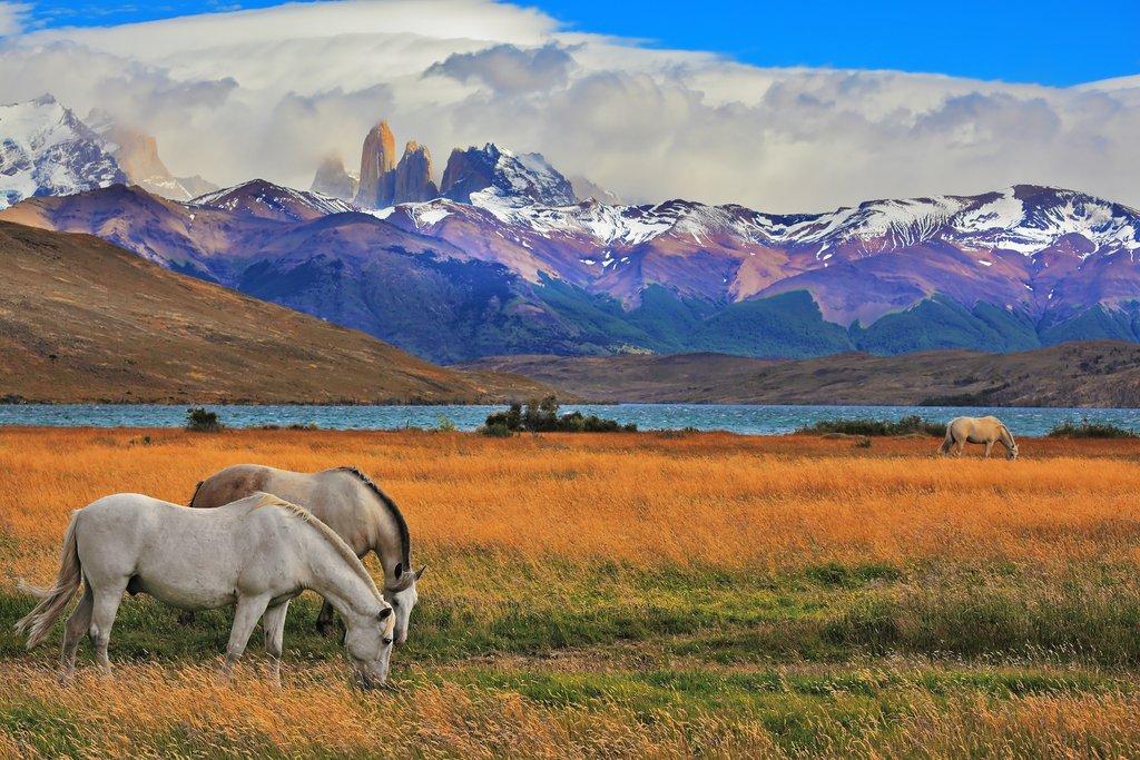 Wild horses in Laguna Azul, Torres del Paine