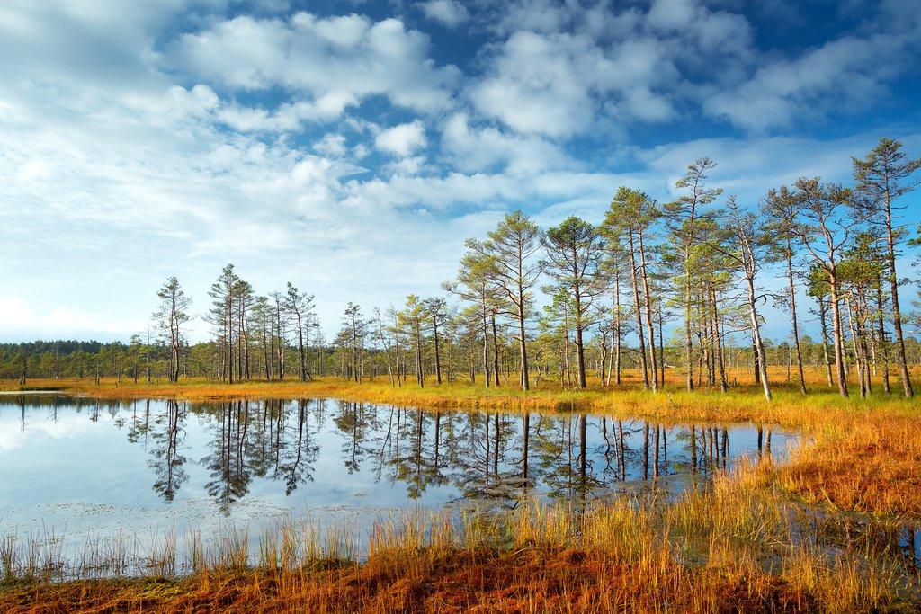 Lahemaa National Park in Autumn