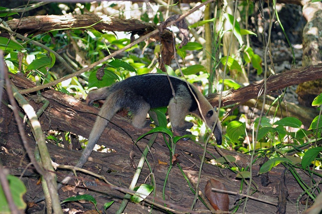 Braulio Carrillo National Park is home to 150 different types of mammals