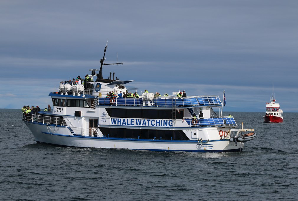 Join a whale watching tour in Reykjavik