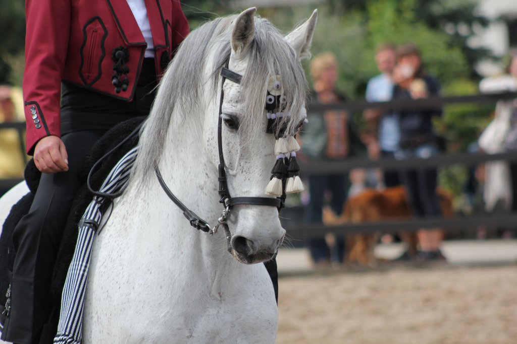 See show horses perform complex dances
