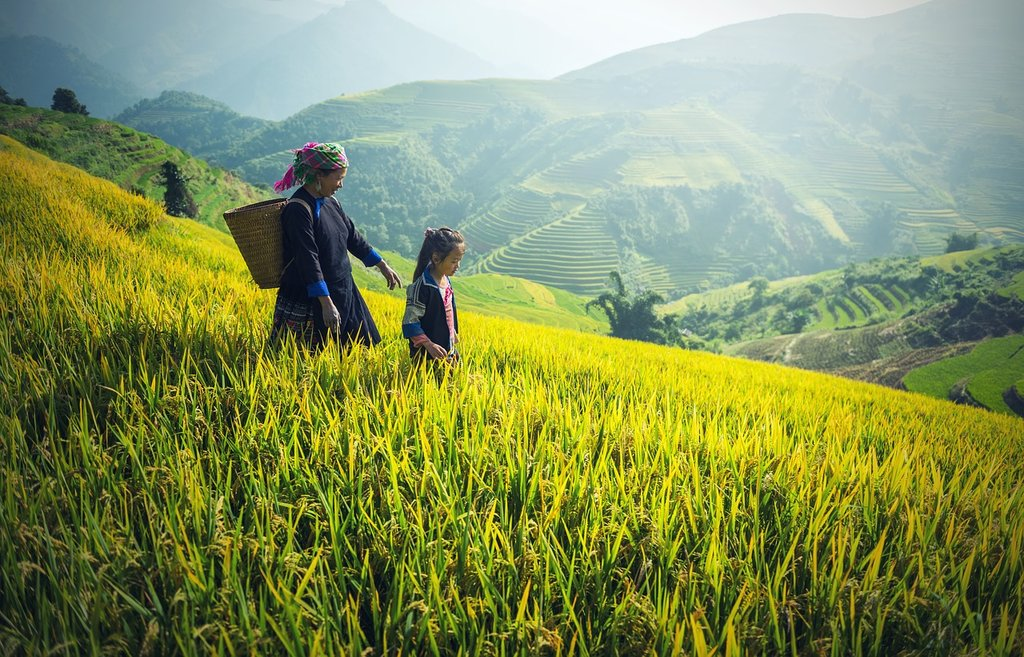 A Black Hmong woman and her daughter tend to the fields