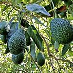 Organic Farming & Picnic for Families on Paros
