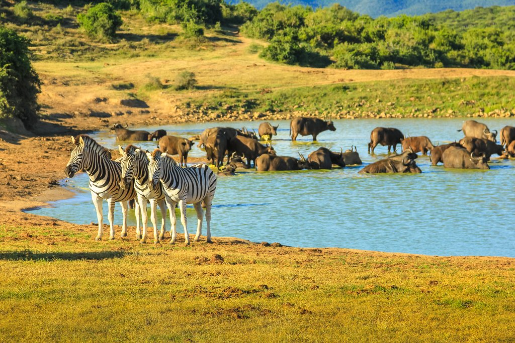Addo watering hole