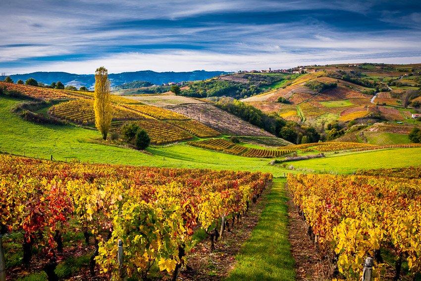 Beaujolais region