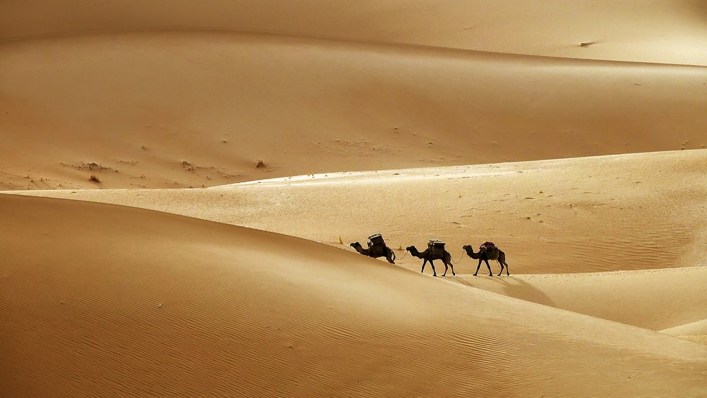 Camel caravan in the Moroccan Sahara