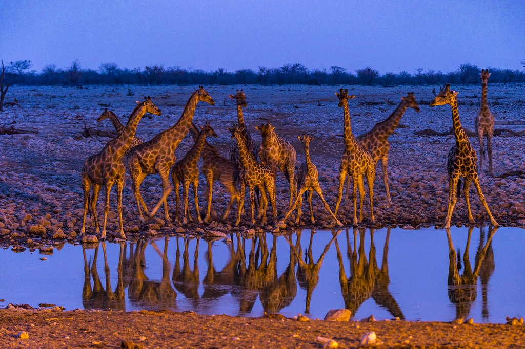 Etosha at Sunset