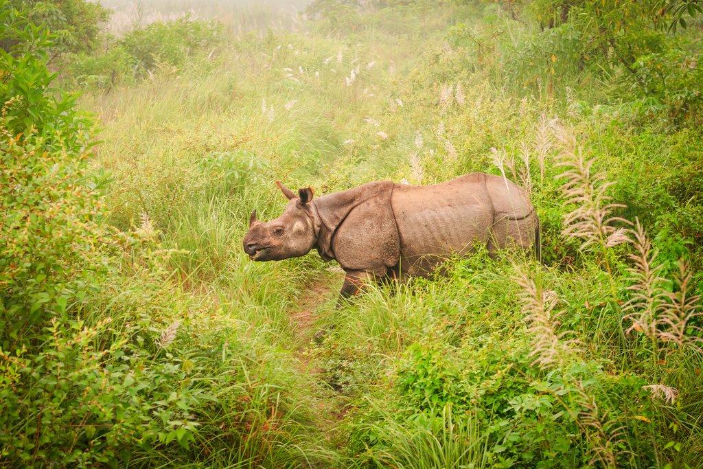 Wild endangered one-horn rhinoceros