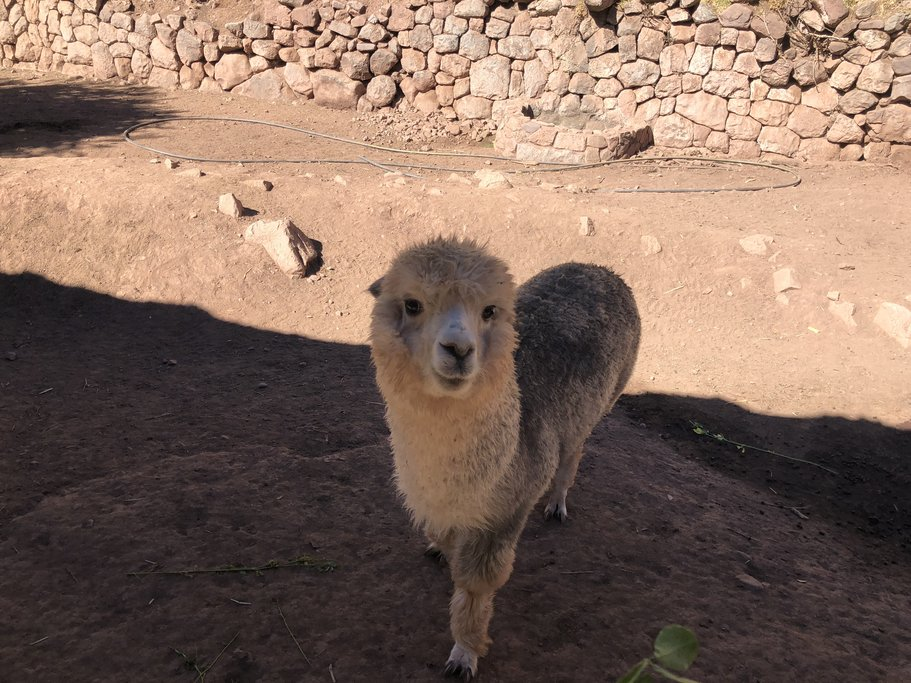 Visit the Llama sanctuary to meet these friendly animals