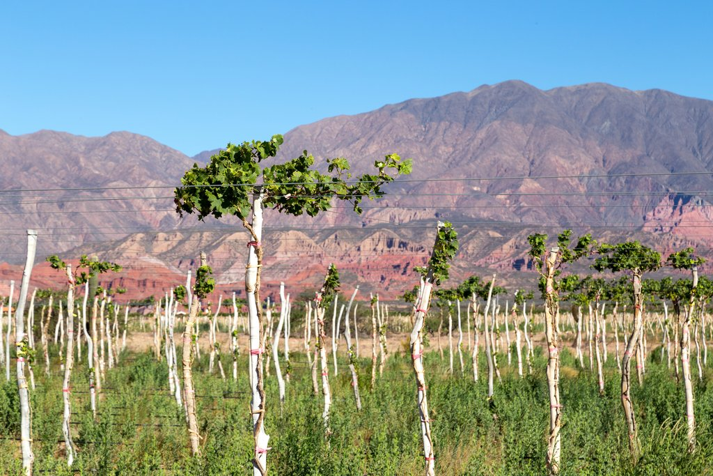 The Calchaqui Valley provides a colorful setting for Cafayate's wineries