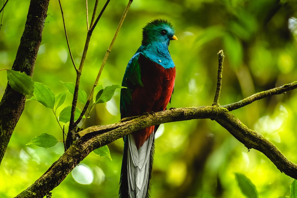 Monteverde is home to diverse and rare wildlife like the quetzal