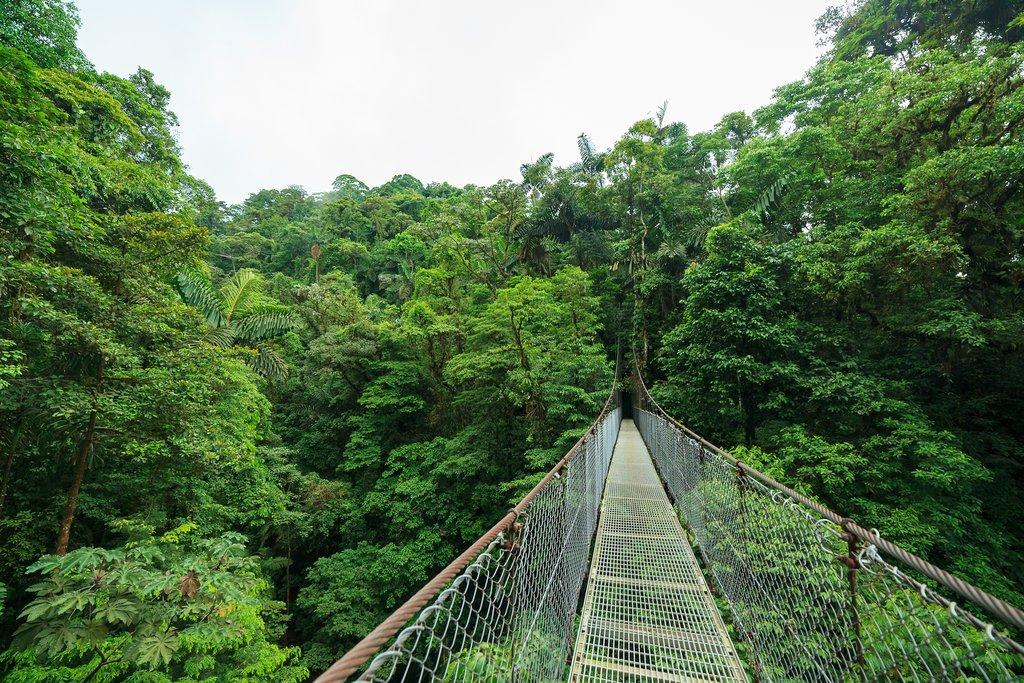 Suspension bridges in the cloud forest