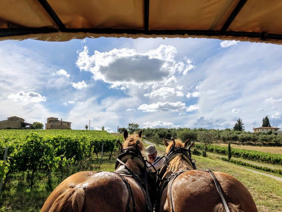 Enjoy a Wagon Ride with the Horses