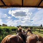 Horse-Drawn Wagon Ride & Picnic in Chianti