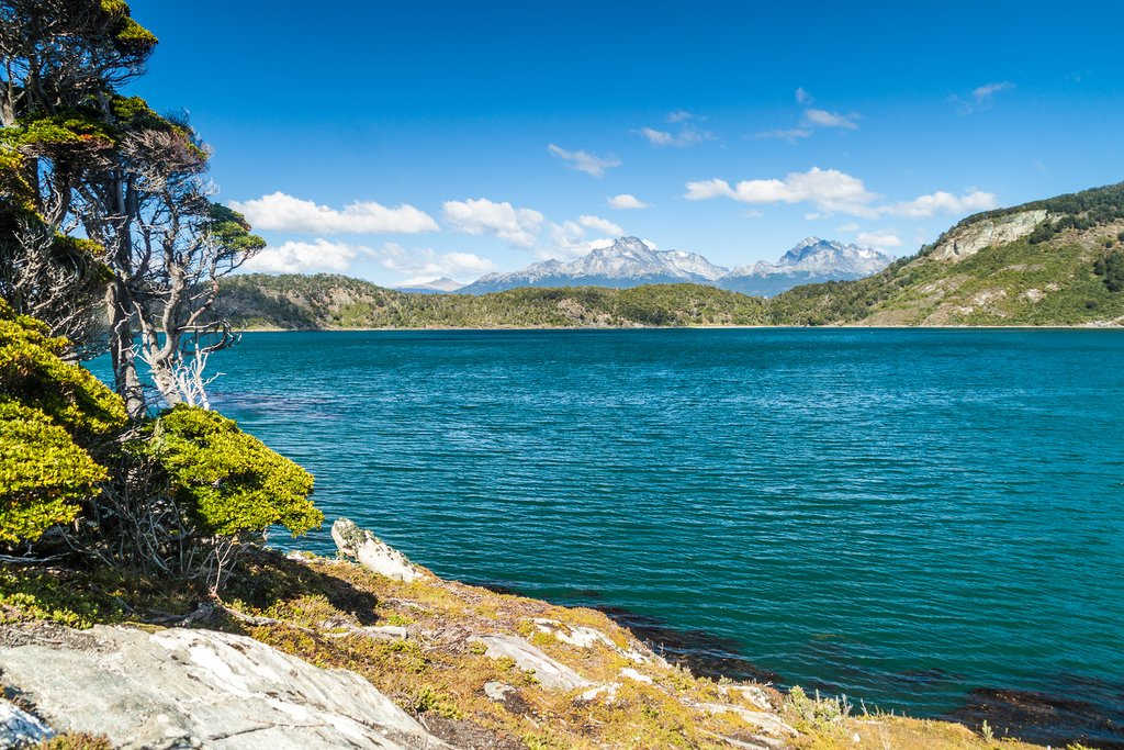 Summer in Tierra del Fuego National Park, Argentina