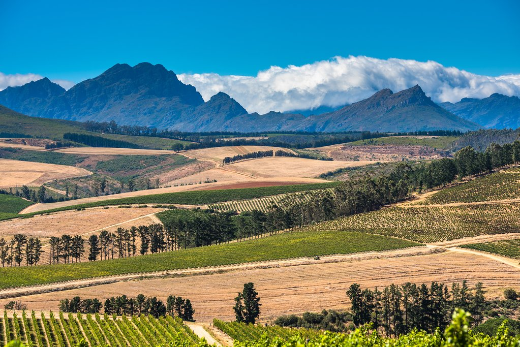 Beautiful landscape in Cape Winelands