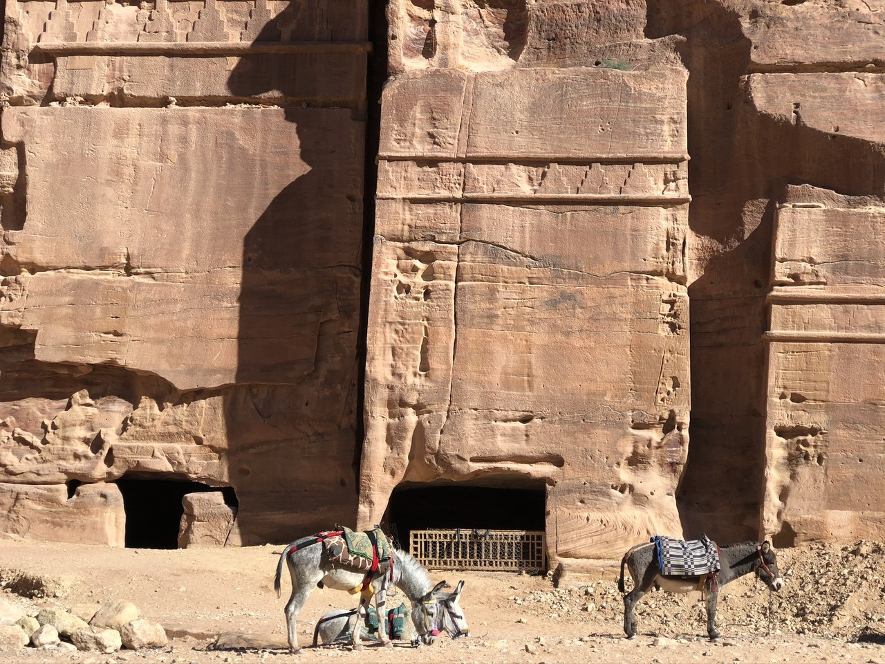 Local donkeys in Petra