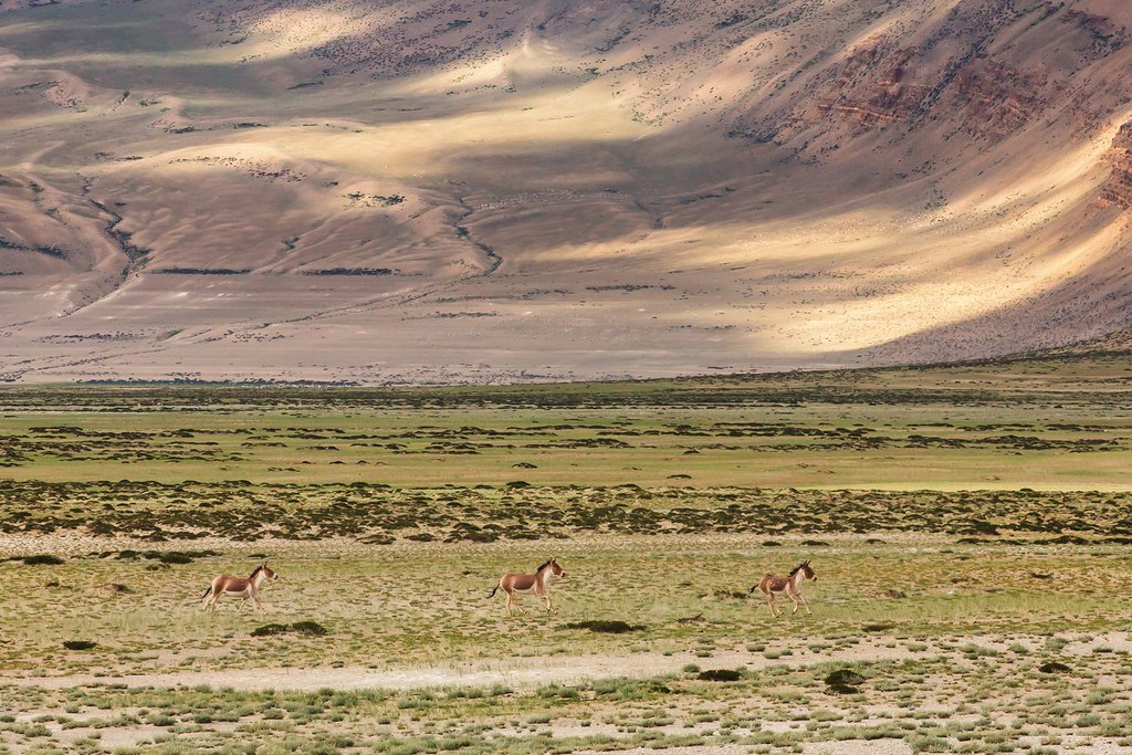 Landscapes in the Changthang area