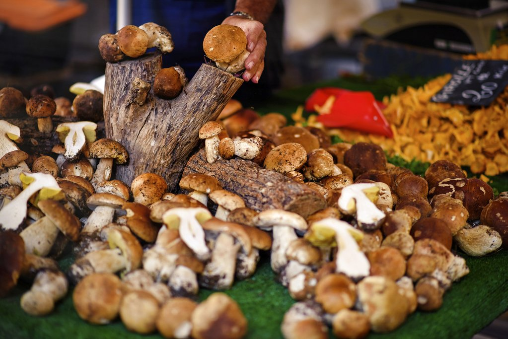 Wild mushrooms in a French marketplace