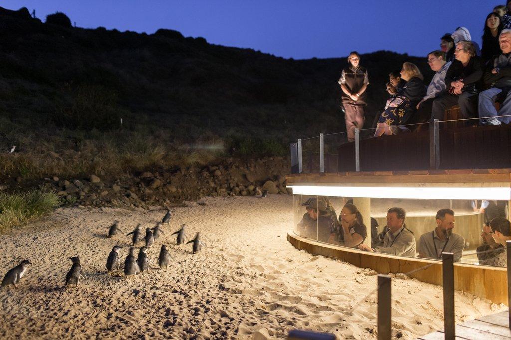 Penguin Parade Phillip Island Victoria
