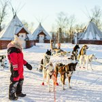 Sled dogs in Norway
