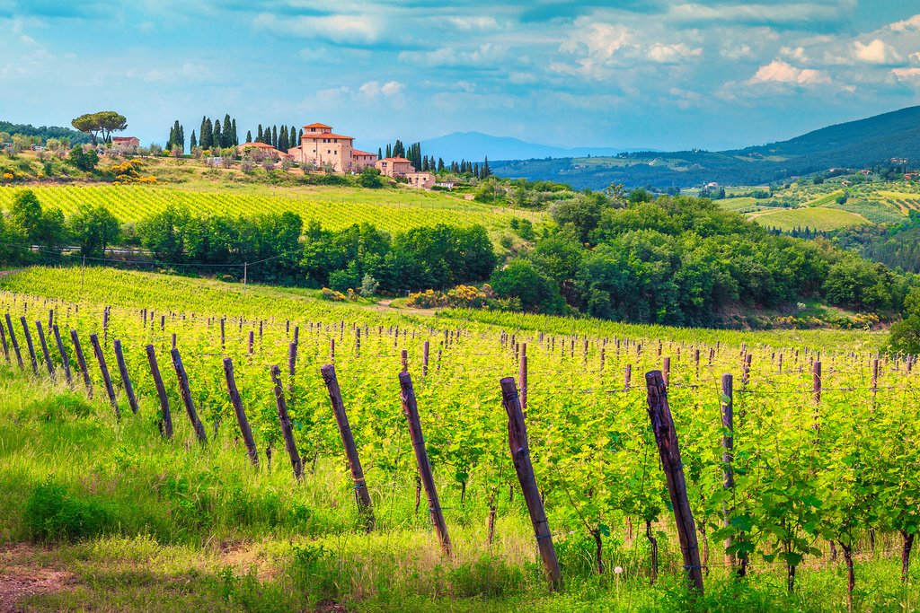 The view from your bicycle: a vineyard in Chianti