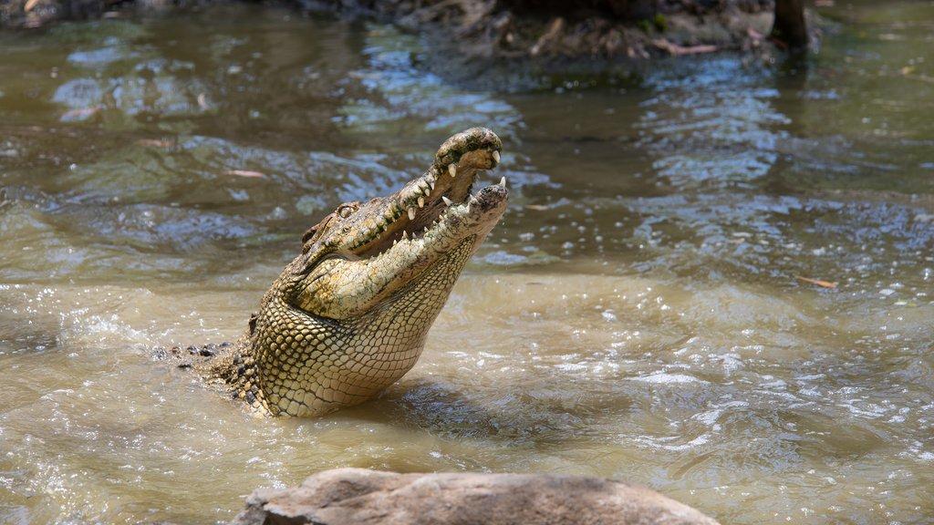 Visit Hartley's Crocodile Adventures
