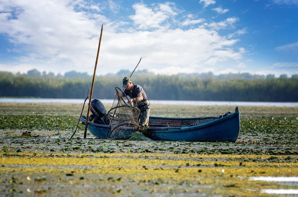 Fisherman netting fish in Danube Delta, Romania