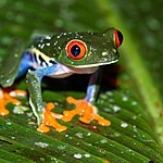 Listen to the chorus of tree frogs at night