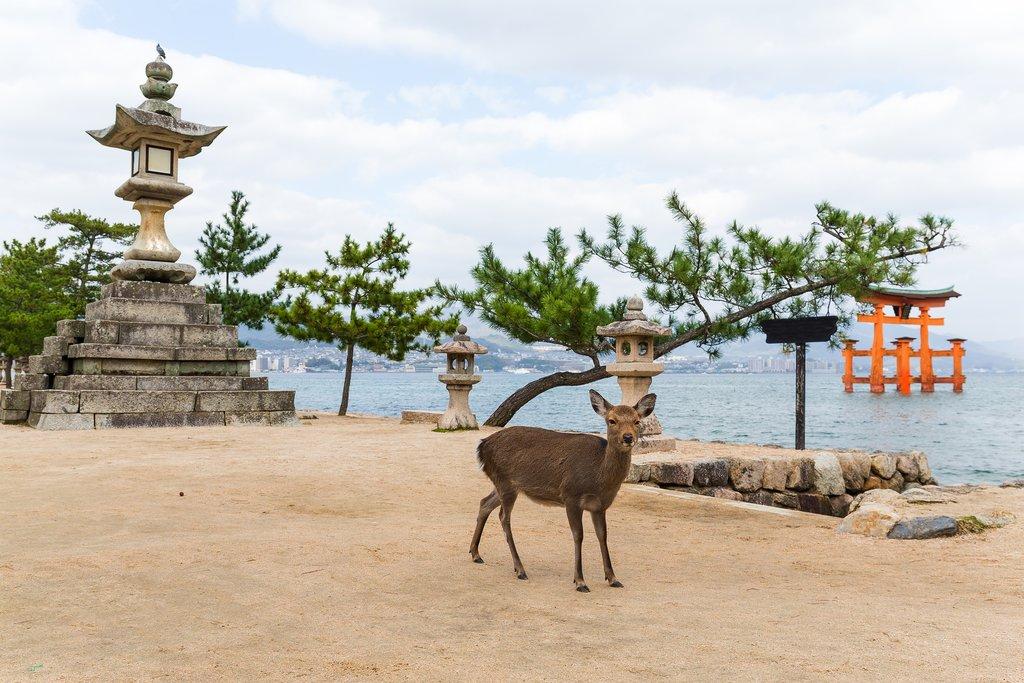 Deer and Great Torii at Itsukushima Shrine, Miyajima, Japan