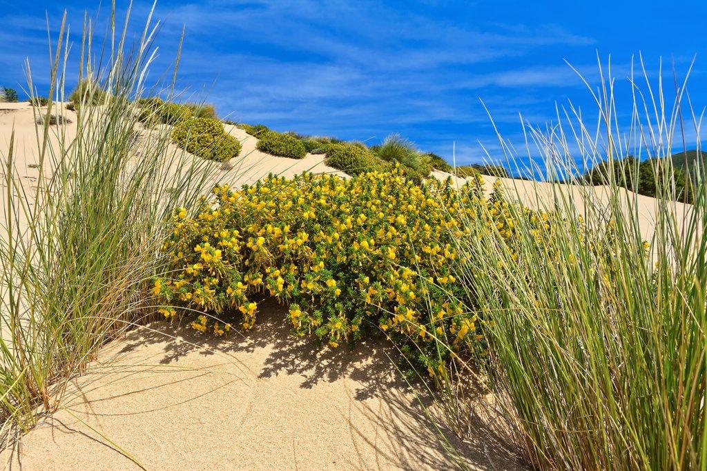 Dune, Flowers, and Sea in Piscinas, Sardinia