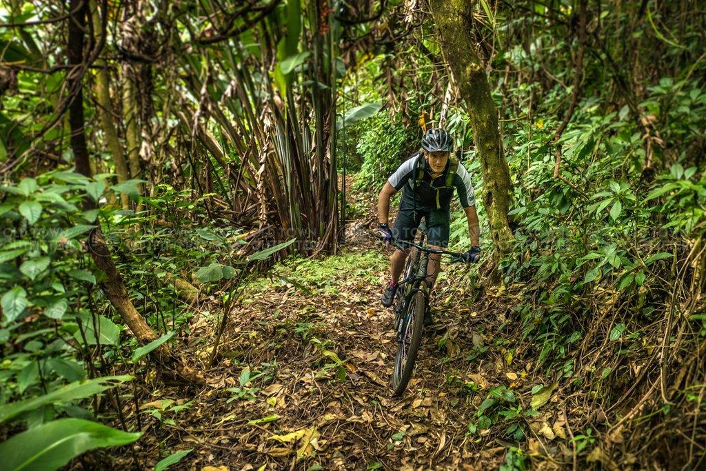 Bike through lush forests on the El Zur trails.