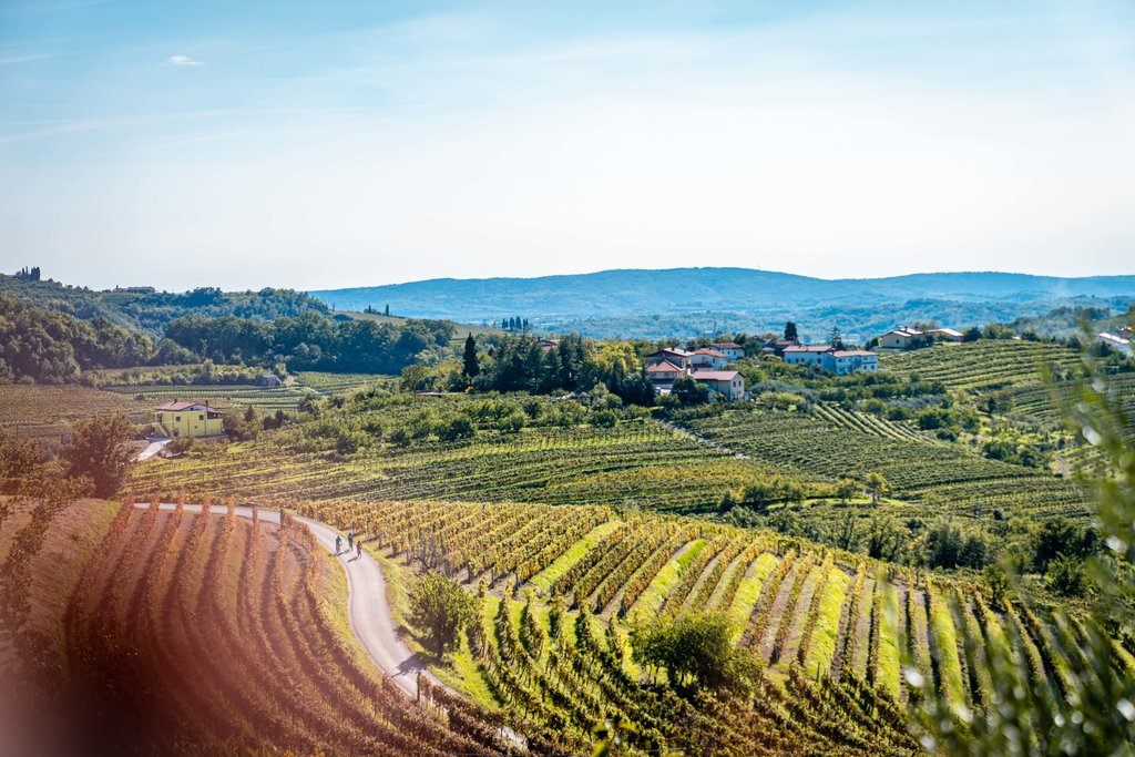The rolling vineyards of the Karst Region.