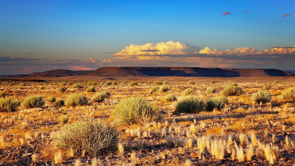 Kalahari Desery