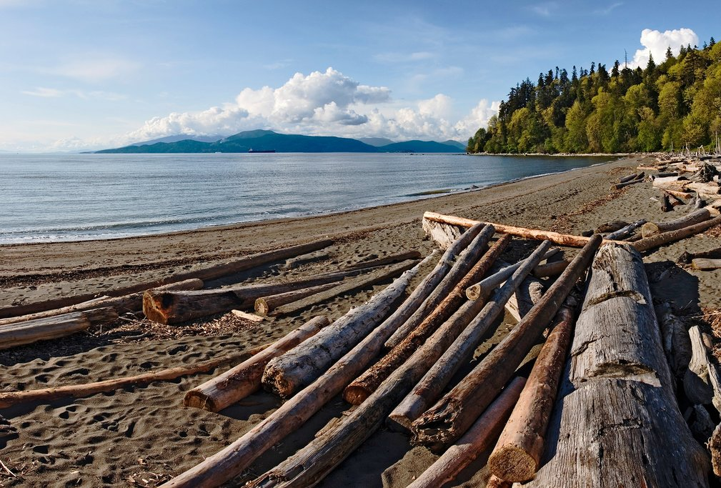 A driftwood-strewn beach of Point Grey