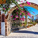 Pink bougainvillea is popular in Santorini