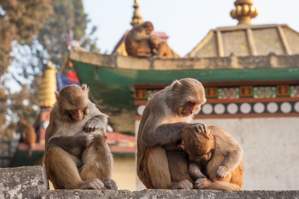 The cityscape of Kathmandu and Boudhanath Stupa