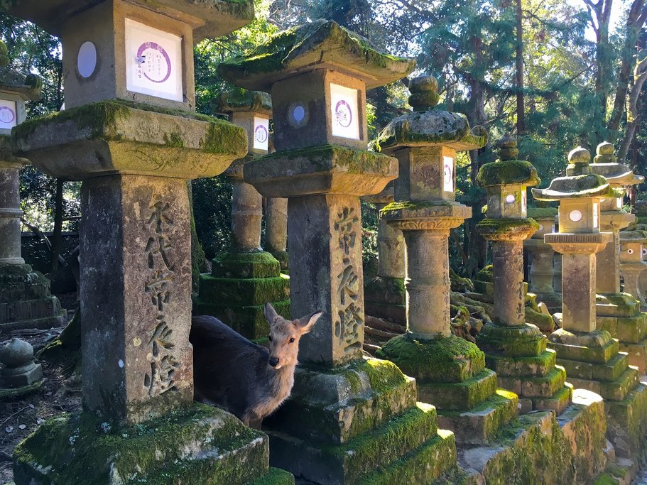 Friendly deer mingle among the ancient statues and lanterns of Nara.