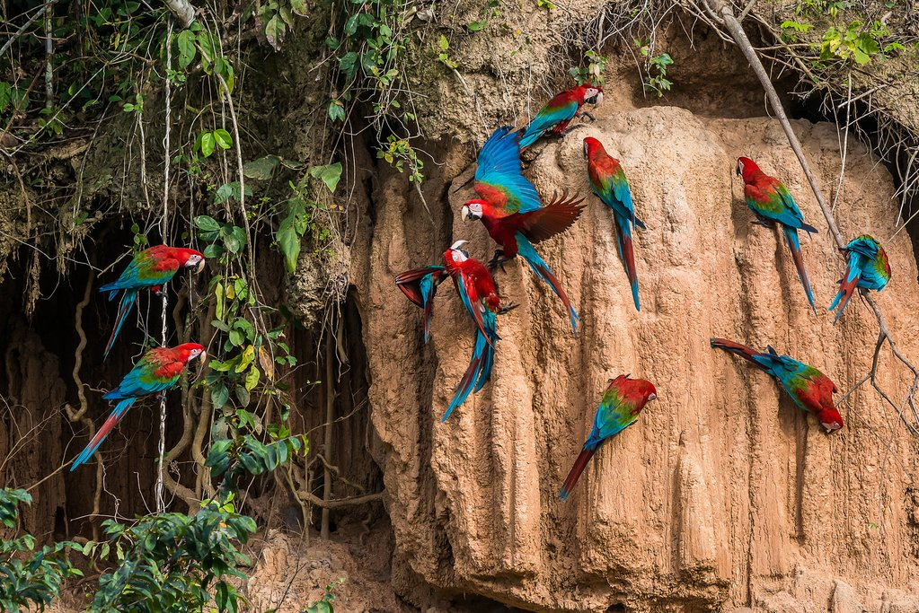 Literally the world's best place to spot parrots!