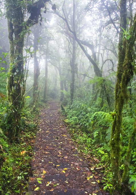 How to Get from Arenal/La Fortuna to Monteverde