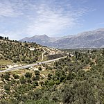 Vines and olive trees in the hills