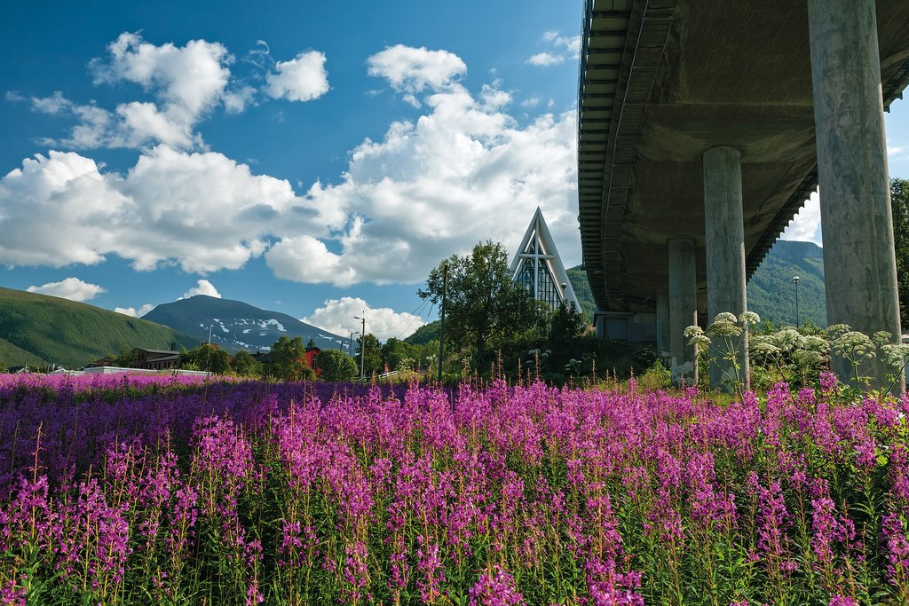 Tromsø's Arctic Cathedral and wildflowers