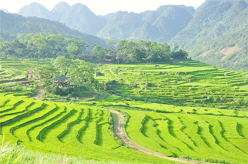 Rice terrace field at Pu Luong